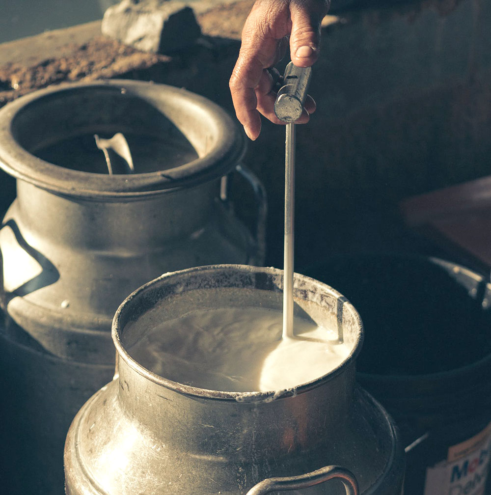 How to Increase Milk Production in Cows and Buffalo in Pakistan